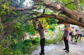 SAR Brimob Bone Evakuasi Pohon Tumbang di Jalan