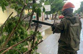 SAR Brimob Bone Evakuasi Pohon Tumbang