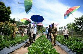 Kebun Stroberi di Bantaeng Tawarkan Nuansa Berbeda