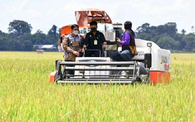 PANEN RAYA. Menteri Pertanian RI, Syahrul Yasin Limpo (tengah), melakukan panen raya padi di Kabupaten Maros, Sabtu (20/3/2021). foto: humas pemprov sulsel