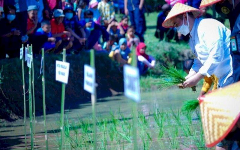 TANAM PADI. Bupati Pangkep, H Muh Yusran Lologau, turun ke sawah menanam padi di sela-sela peluncuran Pangkep Sejahtera di Desa Bara Batu, Kecamatan Labakkang, Kabupaten Pangkep, Jumat (30/4/2021). foto: humas pemkab pangkep