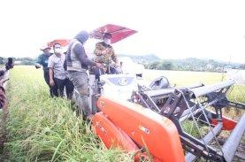 Abdul Hayat Panen Perdana Padi Varietas M70D