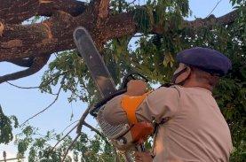 SAR Brimob Bone Gerak Cepat Evakuasi Pohon yang Membahayakan Warga