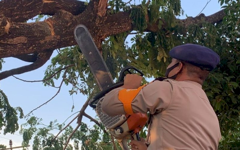 EVAKUASI. Tim SAR Batalyon C Pelopor memotong dan mengevakuasi pohon yang membahayakan keselamatan warga di Jl A Muh Amir, Kelurahan Masumpu, Kota Watampone, Kabupaten Bone, Jumat (8/10/2021). foto: istimewa
