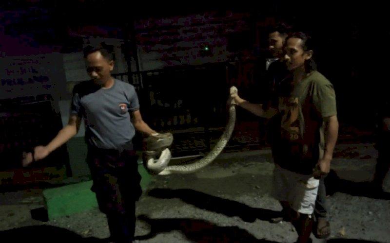 AMANKAN ULAR. Anggota Brimob Batalyon C Pelopor Bone mengamankan ular piton berukuran besar Jl Kawerang, Kelurahan Manurungge, Kecamatan Tanete Riattang, Kabupaten Bone. foto: istimewa